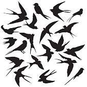Diverse collection of silhouettes birds