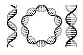 Vector illustration of dna strands.