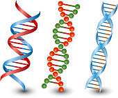 Seamless DNA strands. Vector on the white background