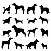 Dog breed vector black silhouette. Dog breed black icons isolated on white background. Dog breed black vector icon illustration. Dog breed black silhouette isolated vector. Dog breed flat silhouette