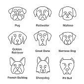 Dogs breeds linear vector icons. Thin line. Pug, Rottweiler, Maltese, Golden Retriever, Great Dane, Bernese Dog, Sheepdog, Bulldog, pit bull