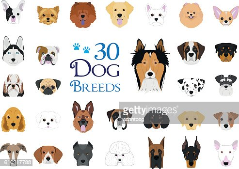 30 dog breeds Vector Collection in cartoon style : stock vector