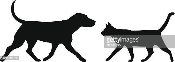Dog Cat Walk