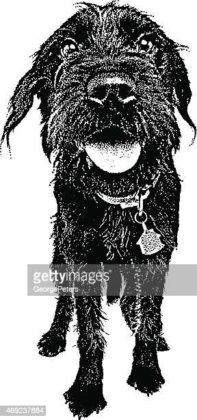Dog. Labradoodle with Funny Expression
