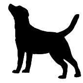 Dog Labrador Retriever breed on a white background. Silhouette. Vector illustration