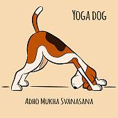 Cartoon dog shows yoga pose Adho Mukha Svanasana - Downward Facing Dog. Vector illustration