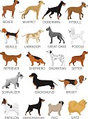 Dogs breed set. Vector flat illustrations