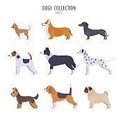 Vector collection of  different dogs breeds - Toy Terrier, corgi, dachshund, border collie, terrier, Dalmatian, Pug, Beagle, Yorkshire Terrier, isolated on white.