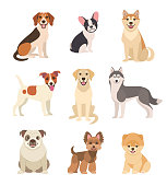 Vector illustration of funny cartoon different breeds dogs in trendy flat style. Isolated on white.