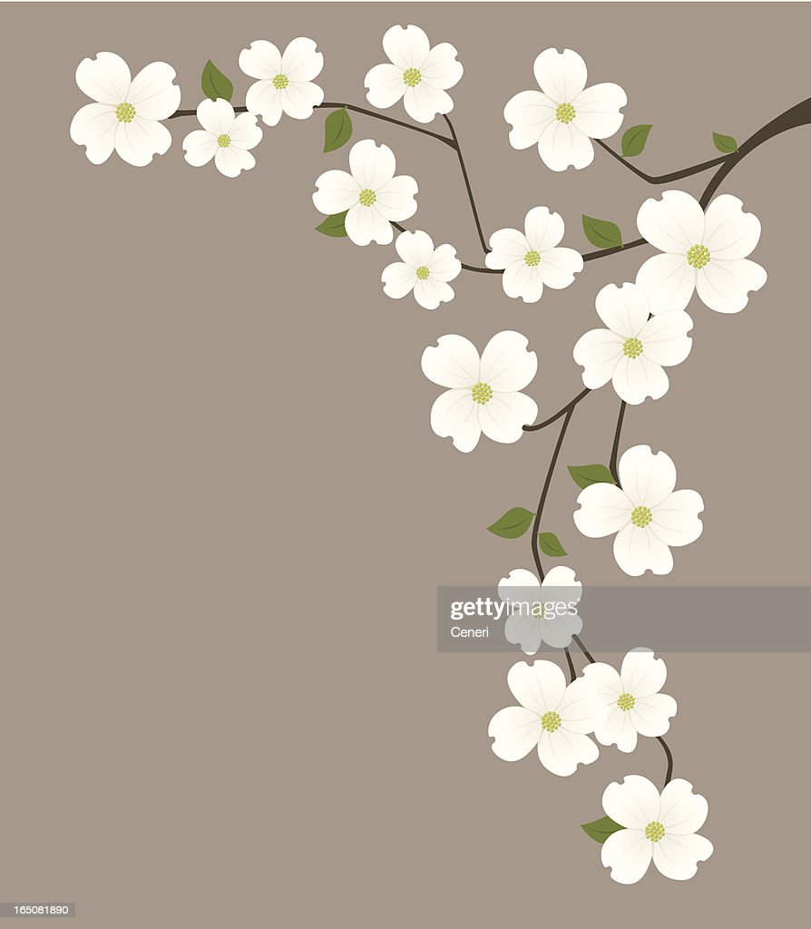 Dogwood Flower Stock Images, Royalty-Free Images & Vectors ...