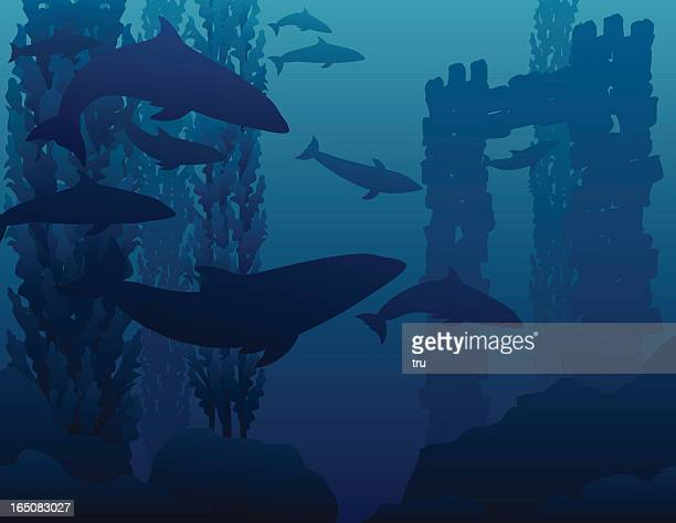 Dolphins and underwater ruins