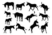 A set of detailed high quality donkey farm animal silhouettes