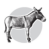 Cute farm animal in profile in engraving style. Vector illustration together with a large raster image.