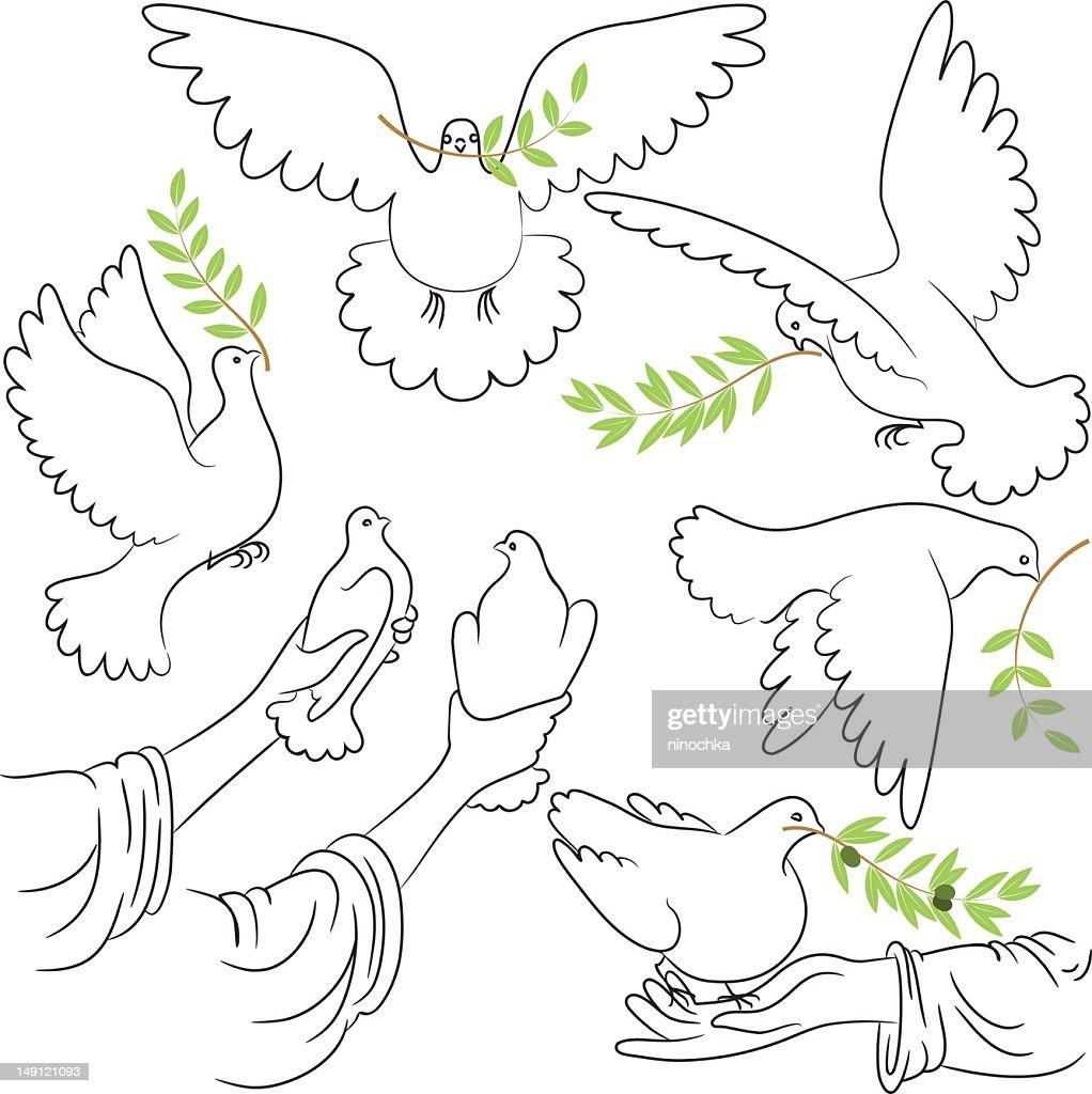 Dove of Peace : Vektorgrafik