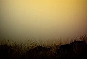 dry field grass with stones, prairie drought landscape, savanna dry hot evening landscape, vector