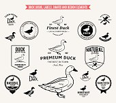 Lots of vector duck design elements for your work. Duck labels, duck cuts diagram and design elements.