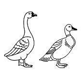 Duck outline icon modern symbol for graphic and web design. Duck icon simple sign for logo, web, app, UI. Duck icon flat vector illustration, EPS10.