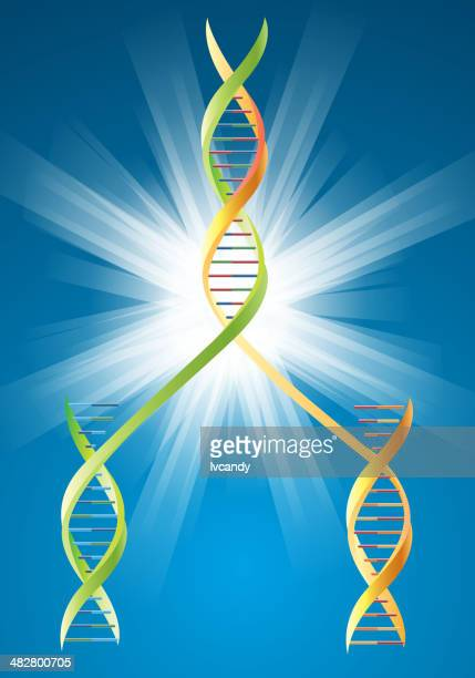 DNA duplication