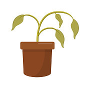 dying dry dead houseplant in a plant pot flat design icon isolated on white background