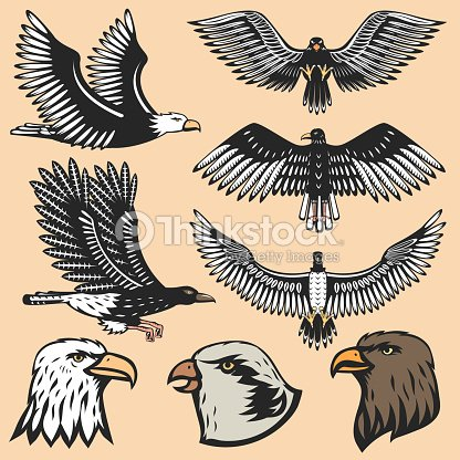 Eagle bird cartoon flying animal silhouette vector illustration of tattoo graphic