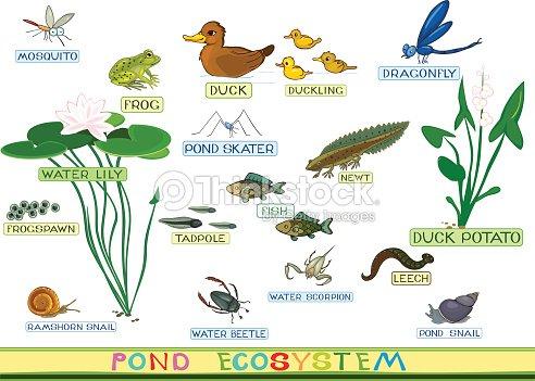 Ecosistema de estanque arte vectorial thinkstock for Ecosistema dello stagno
