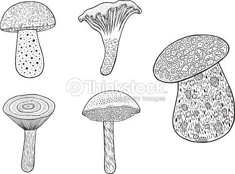 Setas Comestibles Set Doodle Dibujos Animados Para Colorear Página ...