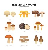 Vector illustration of different types of mushrooms, such as Champignon, Chanterelle, Shiitake, Porcini, Slippery Jack and Truffle in trendy flat style. Isolated on white.
