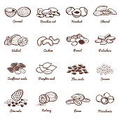 Edible nuts and seeds vector icons. Protein healthy food set of nuts almond and peanut, walnut organic illustration