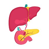 Educational medical poster with liver and pancreas organ