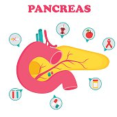Educational medical poster with pancreas organ and icons