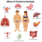 Effects of Alcohol on the Body illustration