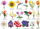 Set of Eighteen colorful most common species of flowers