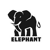 Big Elephant Monochrome icon, symbol. Vector illustration