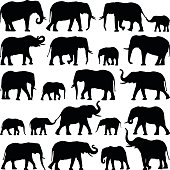 Elephant collection - vector silhouette illustration