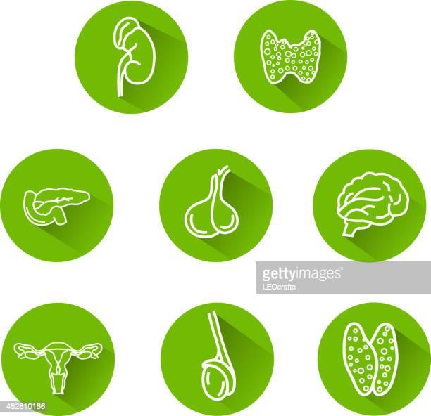 Icônes Système endocrinien