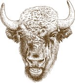 Vector antique engraving illustration of bison head isolated on white background