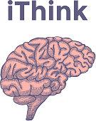 Sketch Ink Human Brain, hand drawn, Engraved Anatomical illustration. Vector illustration