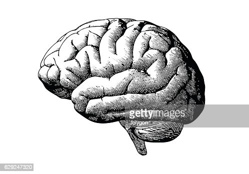 Engraving brain with black on white BG : Vector Art