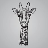 Engraving style giraffe head. African animal in sketch style. Vector illustration. EPS 10.