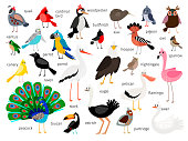 Vector birds. European and asian bird set isolated on white background, cardinal and toucan, bullfinch and pigeon, parrot and flamingo hand drawn birds illustration