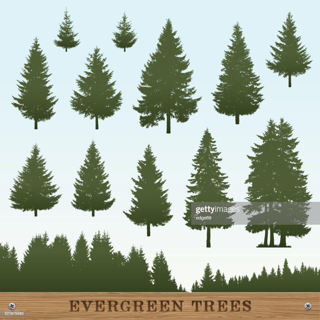 evergreen tree silhouettes vector art getty images