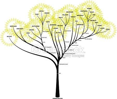 Evolution Tree Vector Art | Thinkstock
