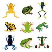 Exotic amphibian set. Different frogs in cartoon style. Green animals isolate on white. Cartoon frog animal illustration vector