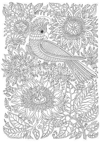 Aves Exóticas Fantásticas Flores Ramas Hojas Dibujo De Línea Fino ...