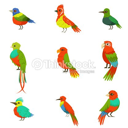 Exotic Birds From Jungle Rain Forest Set Of Colorful Animals Including Species Of Paradise Birds And Parrots