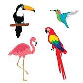 Vector illustration pink flamingo, macaw parrot, toucan and humming bird. Exotic bird set.