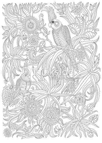 Aves Exóticas Con Fantásticas Flores Ramas Hojas Línea Delgada ...