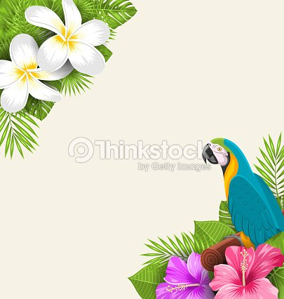 Exotic Border With Parrot Ara Flowers Plumeria And Hibiscus Stock