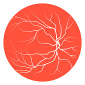Eye veins, blood vessels and arteries. Vector illustration