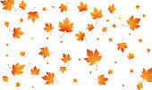 Fall autumn leaves background. Flying maple leaves isolated. Vector autumn background.